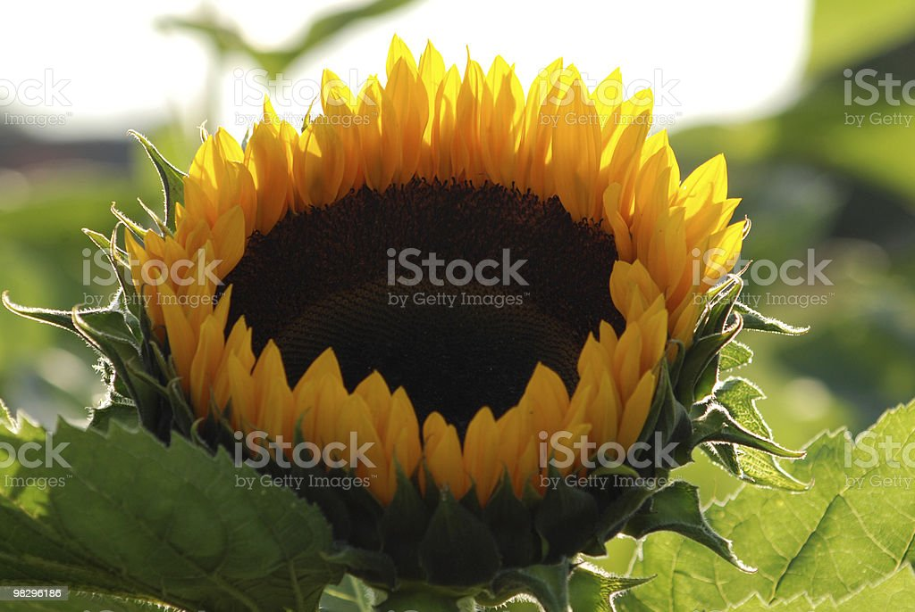 Ring Of Fire royalty-free stock photo