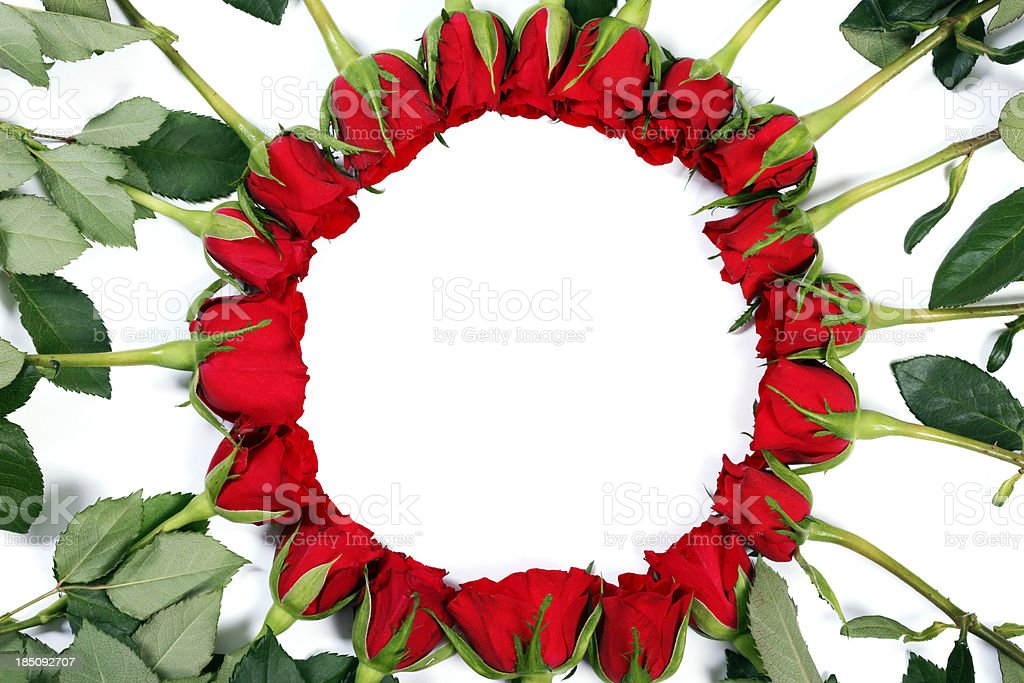 Ring of Roses on White Background stock photo