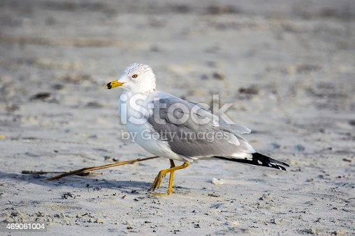 Gull standing on beach at Cape Canaveral in Florida
