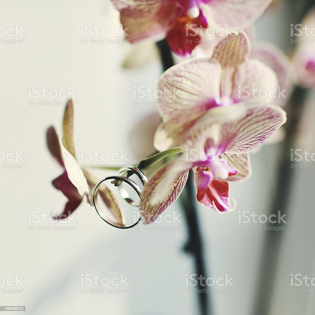 rings hanging on a beautiful flower royalty-free stock photo