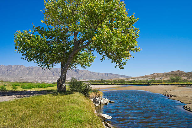 Rio Grande River and cottonwood tree in El Paso Texas Rio Grande River and single green  cottonwood tree with clear blue sky in El Paso Texas. cottonwood tree stock pictures, royalty-free photos & images