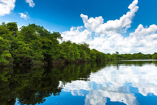 Rio Negro river in Amazon, Brazil Rio Negro river in Amazon, Brazil rio negro brazil stock pictures, royalty-free photos & images