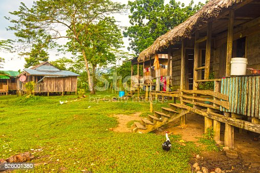 Few simple huts, pile dwellings made of wood and straw against rare trees. In front of the hut chicken with chicks. Rio Platano Reserve in Moskitia, Honduras.