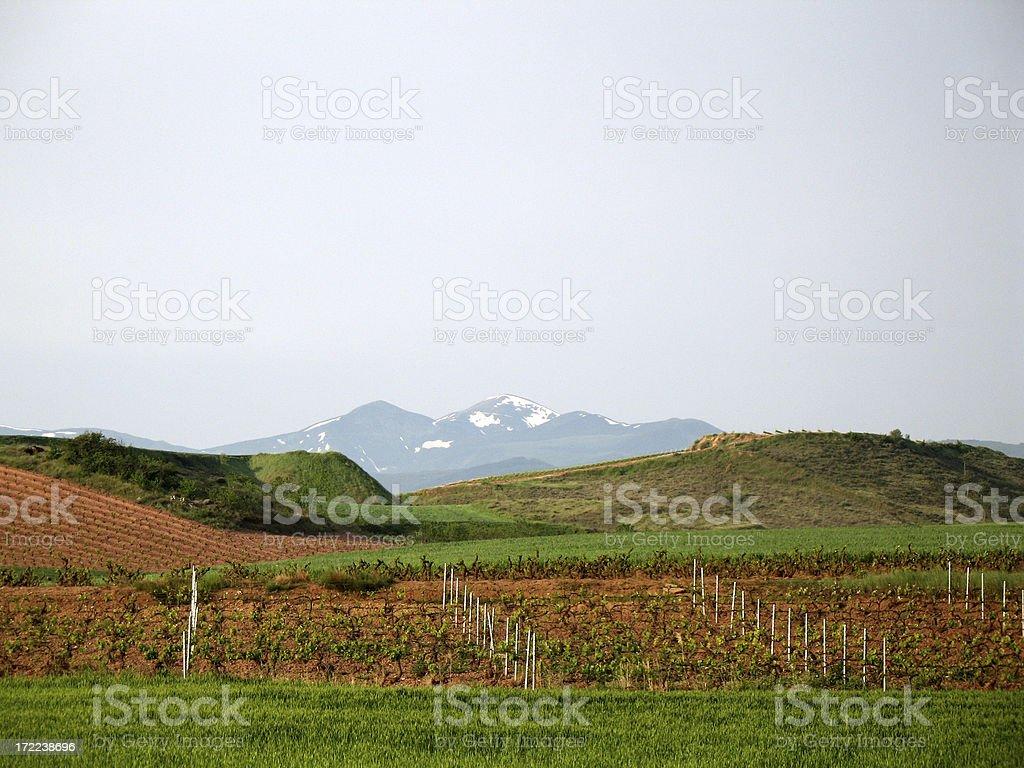 Rioja Vineyard royalty-free stock photo