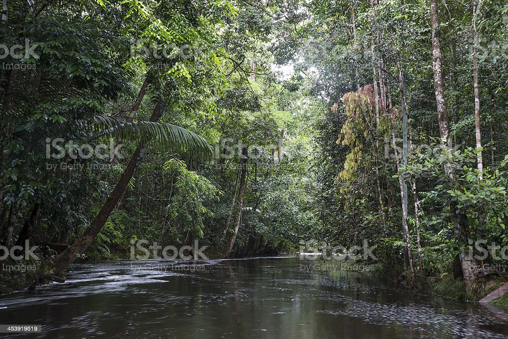 Riparian forest or vegetation stock photo