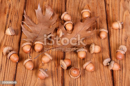 istock Ripe acorns with autumn oak leaves 530696549