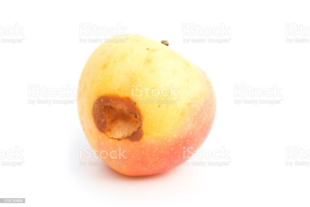 ripe apple bited by insect on white stock photo