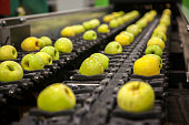 Ripe apples being processed and transported for packing