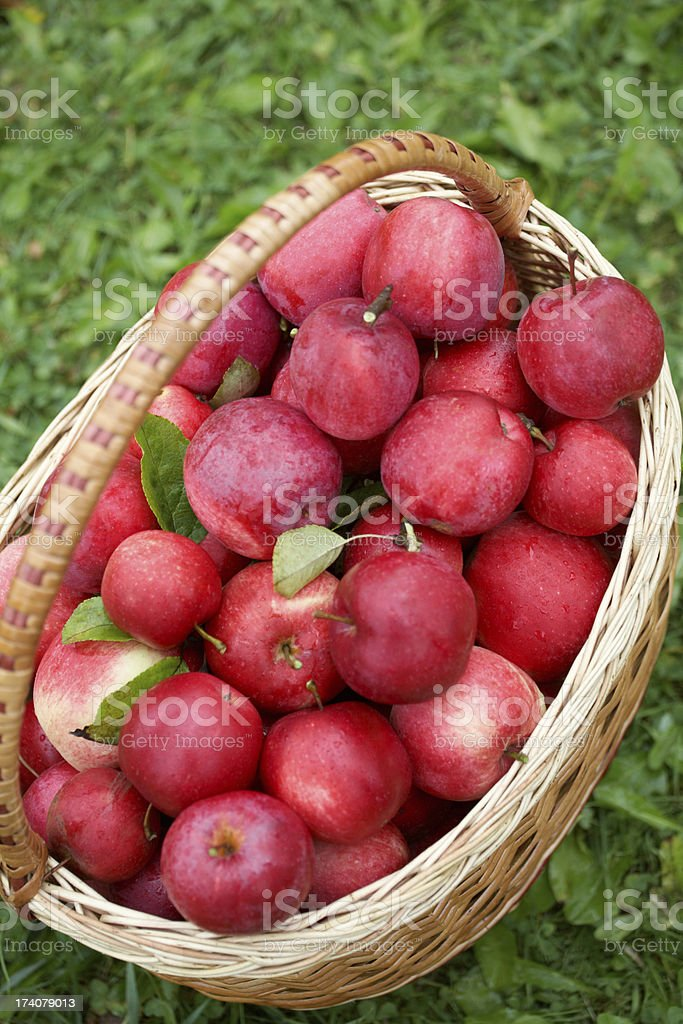 Ripe apples in a basket royalty-free stock photo