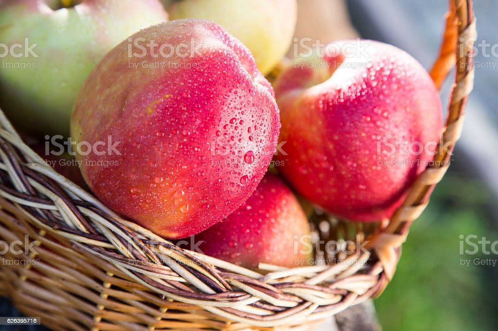 ripe apples in basket on rustic table. red autumn apples stock photo