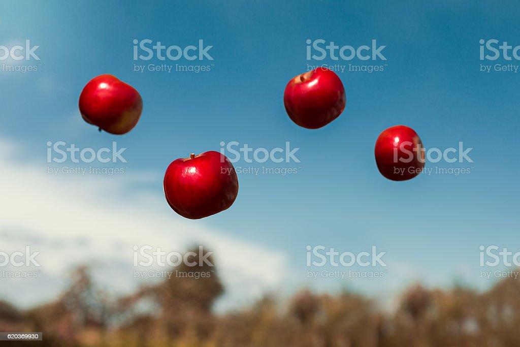 ripe apples in zero gravity thrown into the air zbiór zdjęć royalty-free
