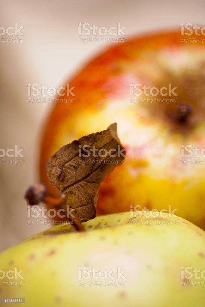 Ripe apples stock photo