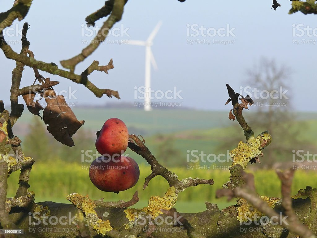 ripe apples with wind power generator royalty free stockfoto
