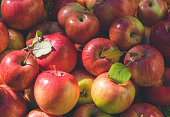 Harvest of red autumn ripe apples in a sunny garden. Agriculture and Organic Food