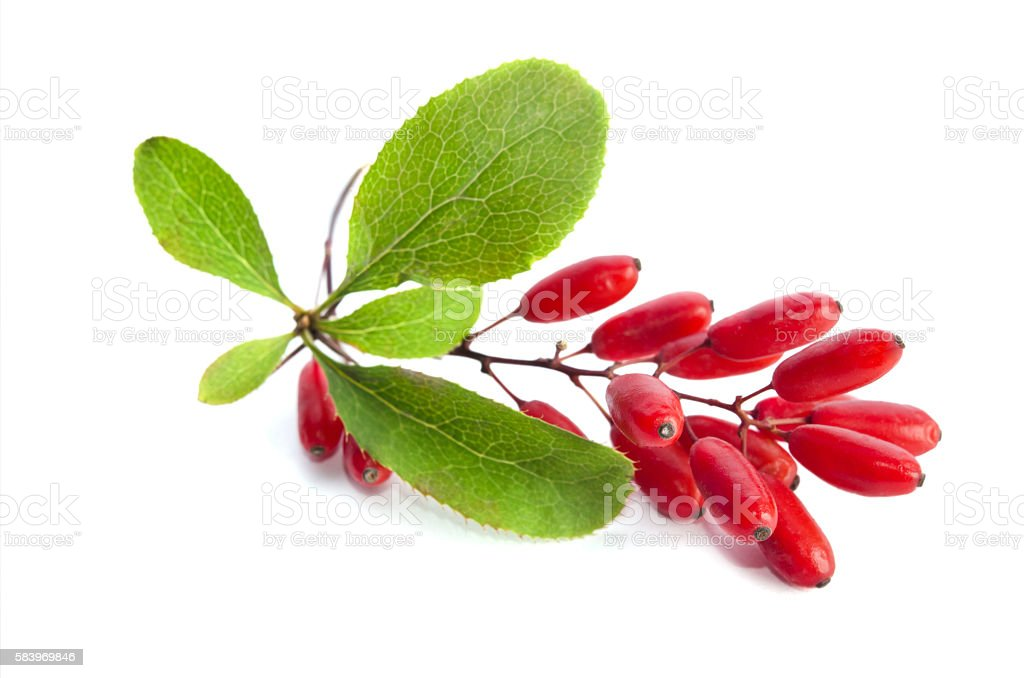 ripe berberries  isolated on white background stock photo
