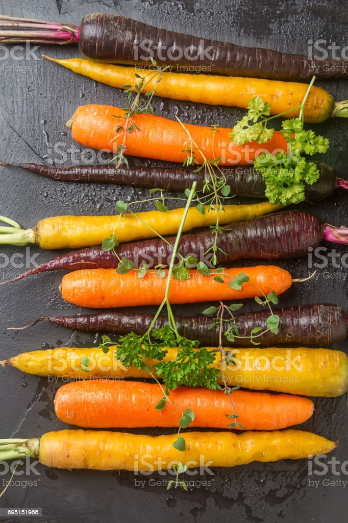Ripe black, orange and yellow carrots with parsley and thyme. Dark stone background. Autumn harvest. stock photo