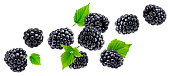 Falling blackberry isolated on white background with clipping path
