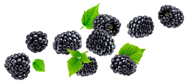 Ripe blackberry isolated on white background Falling blackberry isolated on white background with clipping path blackberry fruit stock pictures, royalty-free photos & images