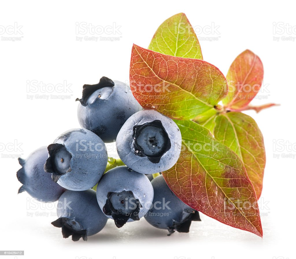 Ripe blueberries. stock photo