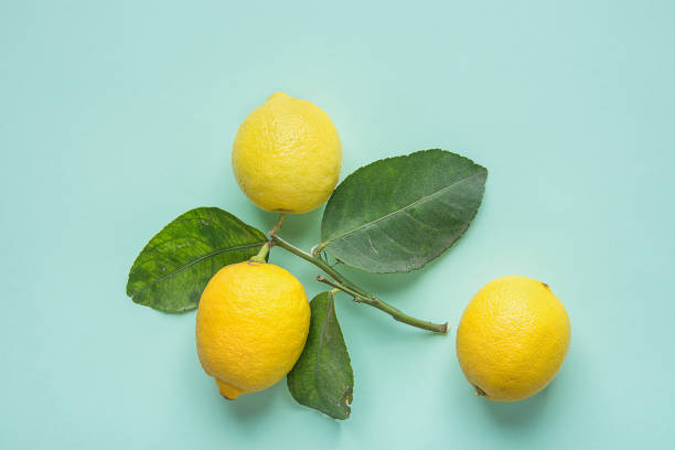 Ripe Bright Yellow Lemons on Branch with Green Leaves on Turquoise Background. Ayurveda Skin Body Care Organic Cosmetics Healthy Superfoods Concept. Styled Image stock photo