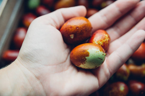 Ripe broun jujube chinese dates on the hand, close up stock photo