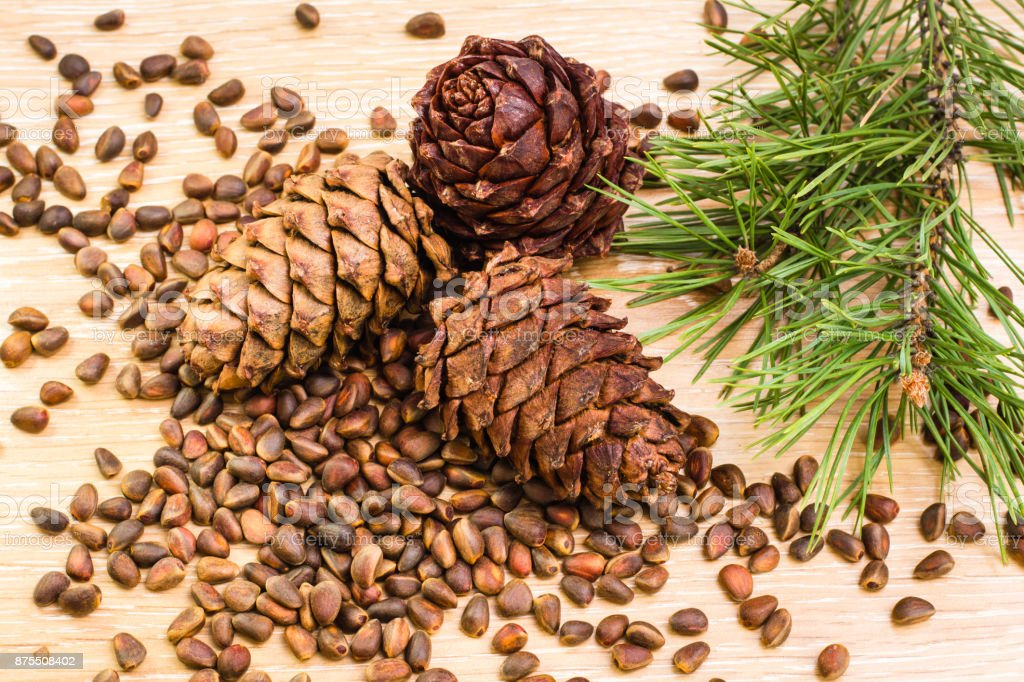 Ripe cedar cones, pine nuts and pine branches on a wooden table