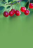Ripe cherries branch closeup photo. Red berry fruit tree, green leaves, summer time garden background. Selective focus, copy space.