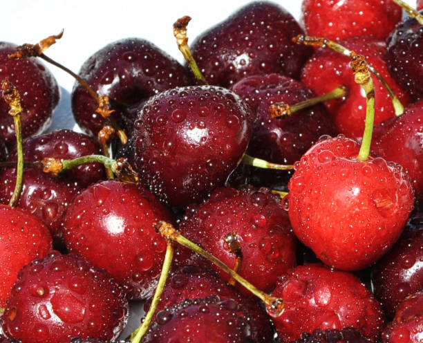 Ripe cherries covered with water drops stock photo