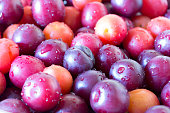 Ripe cherry plum background. Top angle view. Close up. Selective focus. Full frame. Washed whole violet, orange and yellow berries with water droplets on them. Vitamins and healthy nutrition.