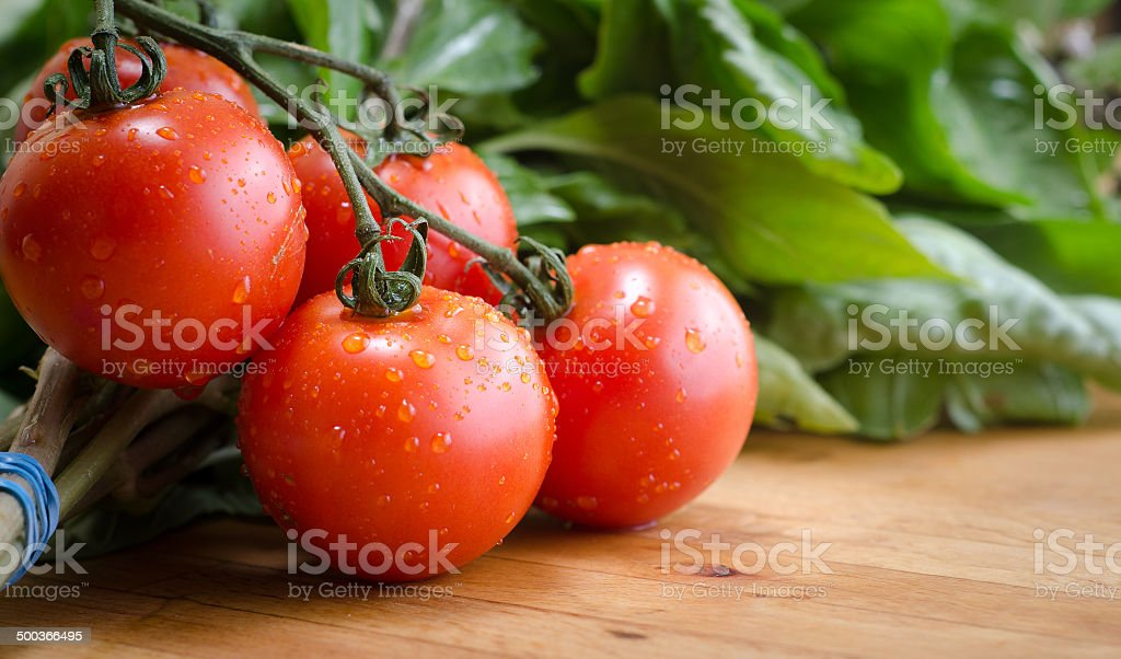 Ripe cluster tomato's and fresh basil royalty-free stock photo