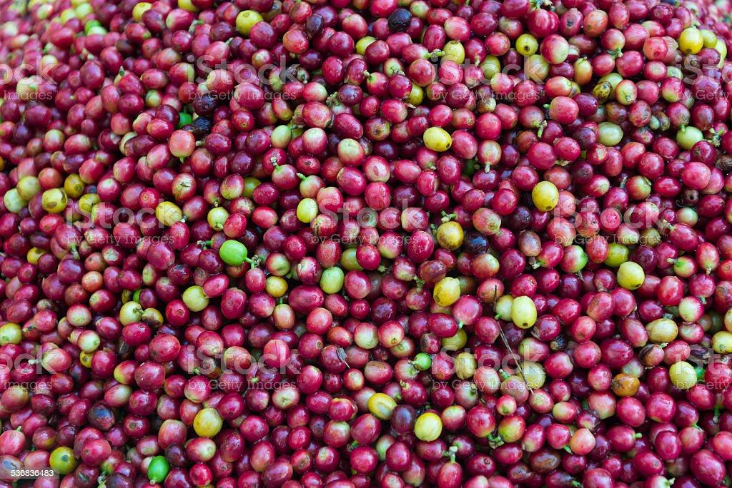 ripe coffee beans background stock photo