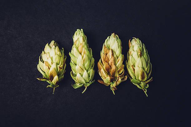 ripe cones beer hops stock photo