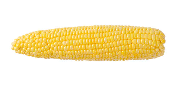 ripe corn cob stock photo