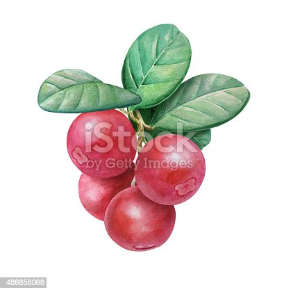 istock Ripe Cowberry 486858068
