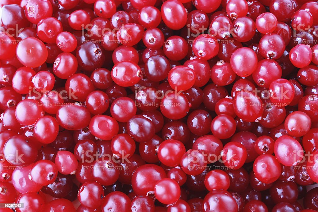 ripe cranberries royalty-free stock photo