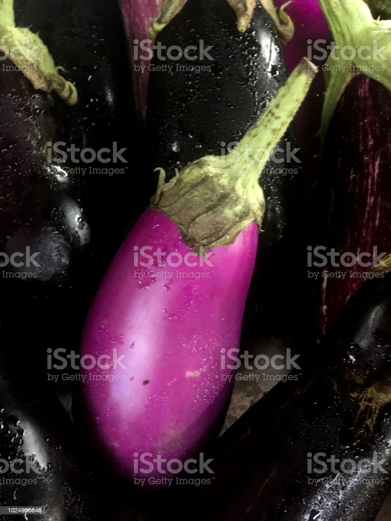 ripe eggplant stock photo