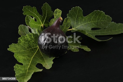 An extreme close up horizontal photograph of a  ripe, freshly picked  Mission fig  against a background of fresh fig leaves.Isolated on black.