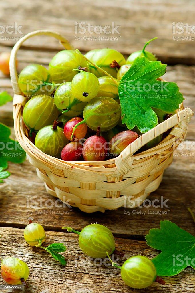 ripe, fresh, organic gooseberries stock photo