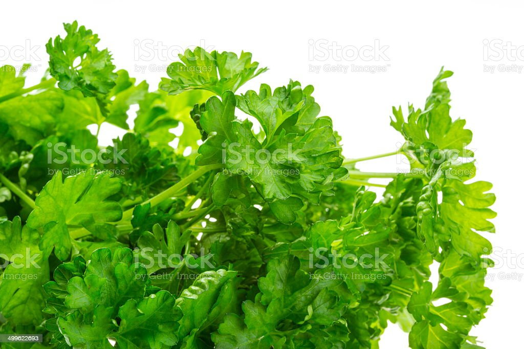 Ripe fresh Parsley royalty-free stock photo