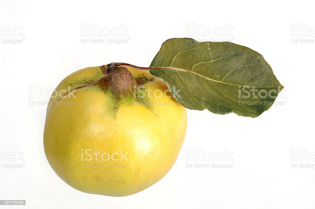 ripe fresh quince with leaf stock photo