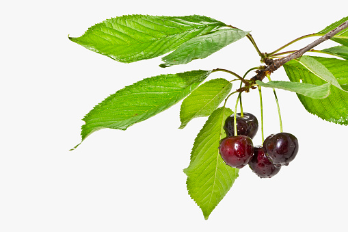 Ripe fruit cherries on a white background close up