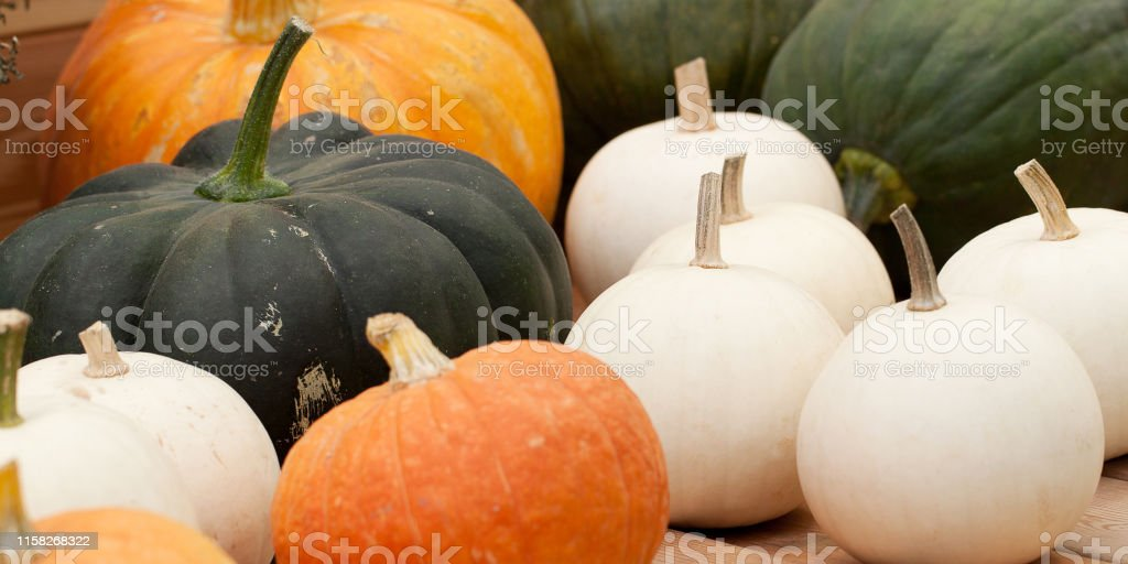 harvest of ripe pumpkins of different colors and sizes with a...