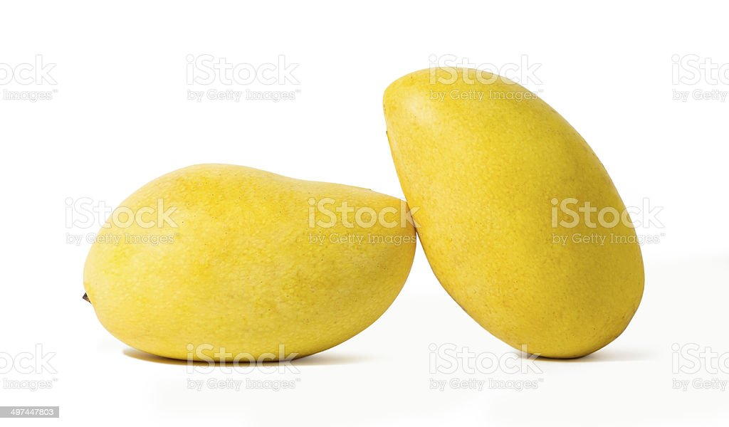Ripe mangoes royalty-free stock photo
