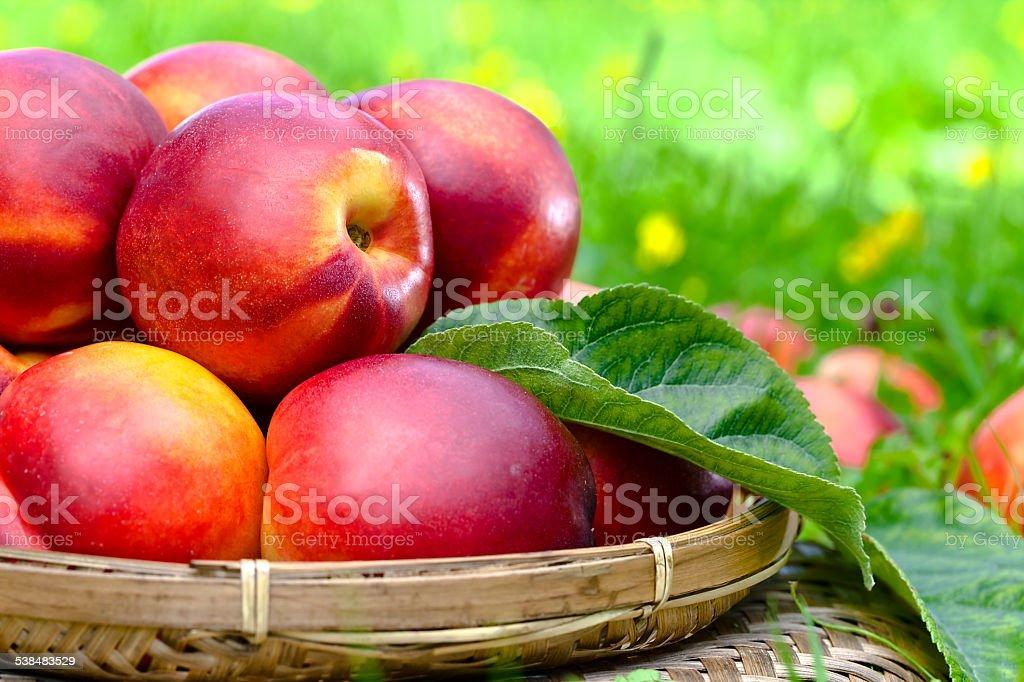 ripe nectarines stock photo