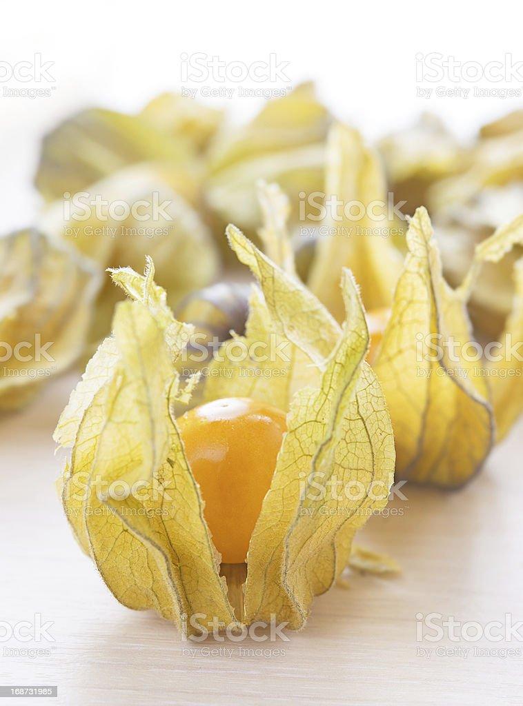 ripe orange physalis stock photo