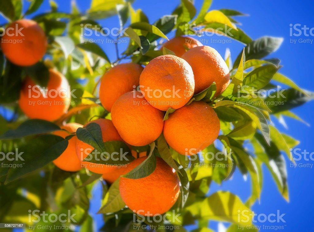 Maturo Arancio - foto stock