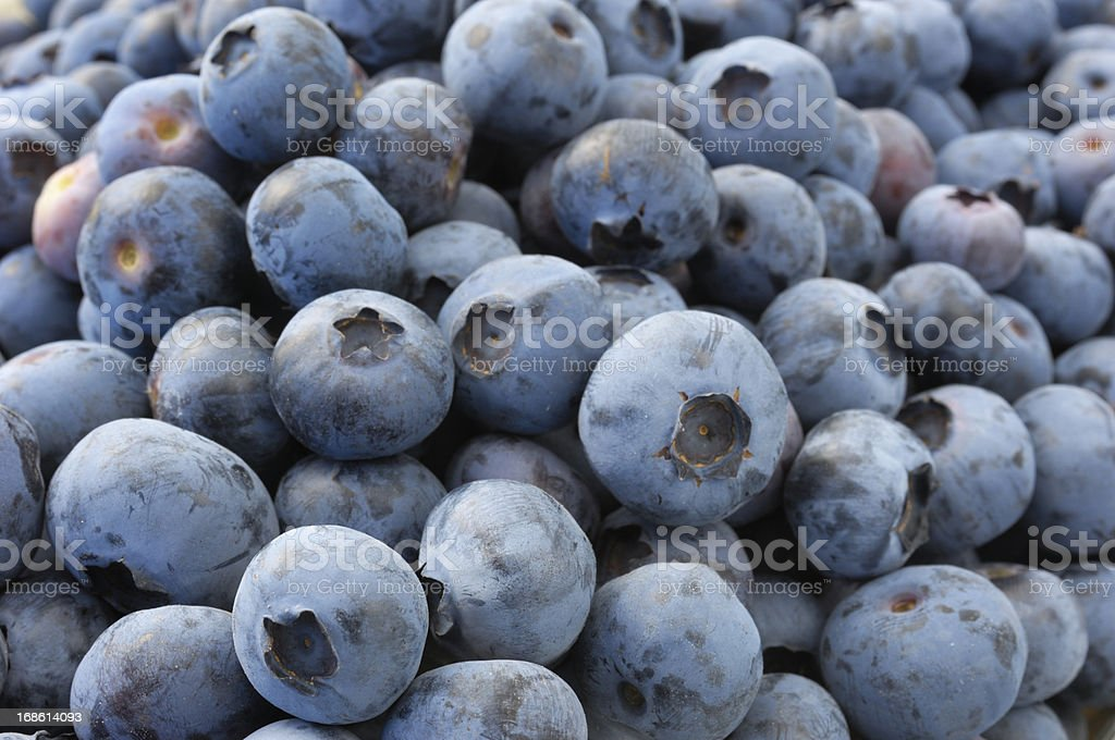 Ripe Organic Blueberries in Containers royalty-free stock photo