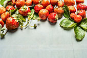 Ripe organic strawberries from garden , place for text, horizontal