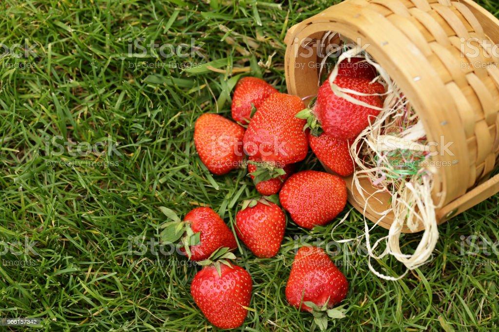 Mogna ekologiska jordgubbar - Royaltyfri Bär - Plantdel Bildbanksbilder