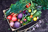 Mix of ripe fresh organic vegetable in the wooden box on the soil